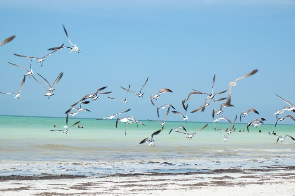 Holbox: Die ganze Schönheit der Natur