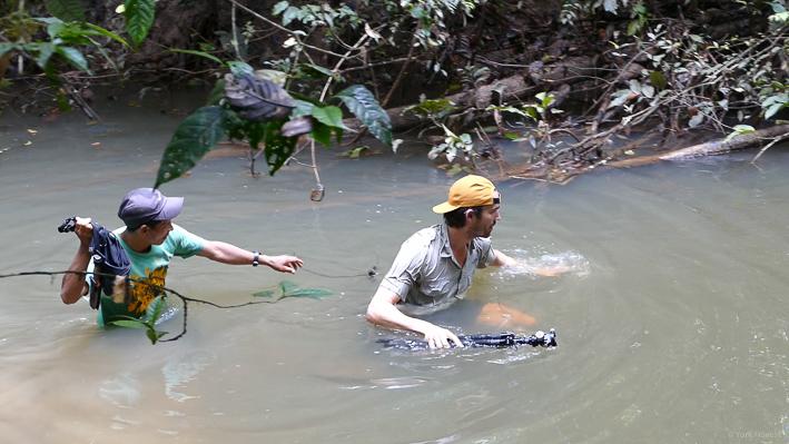 York durchquert den Fluss - und will gar nicht erst wissen, was drin schwimmt