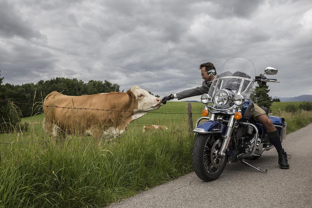 Wer mit dem Bike unterwegs ist, hat auch mal Zeit, eine Kuh zu streicheln...