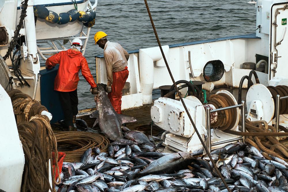 Der industrielle Fischfang sowie illegale Fangflotten in Westafrika sind ein wachsendes Problem. Durch den weltweiten Konsum an Tunfisch werden Wale, Delfine und Haie den Tod zum Beifang - und sterben.