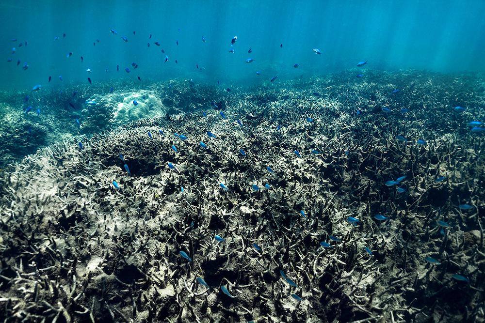 Zerstörte Korallenriffe