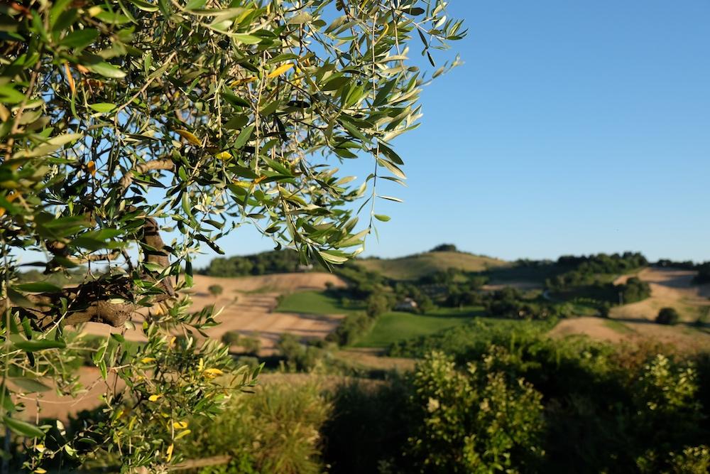 Landschaft Weingut Moroder