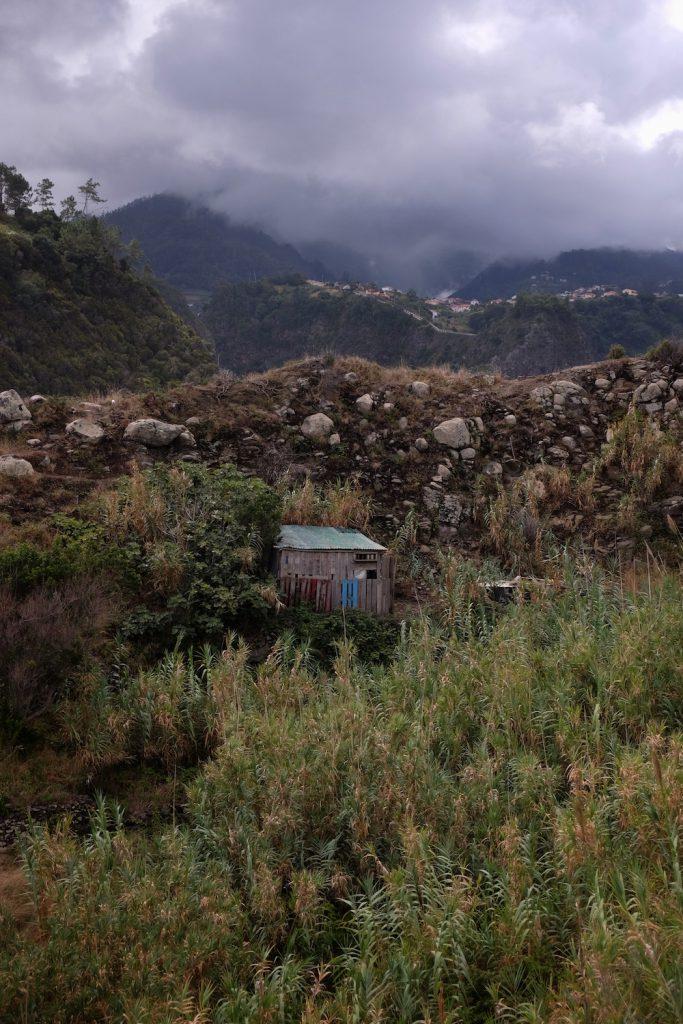 Vegetation Madeira