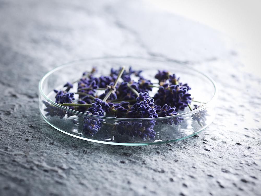 Soavo__Lavendel
