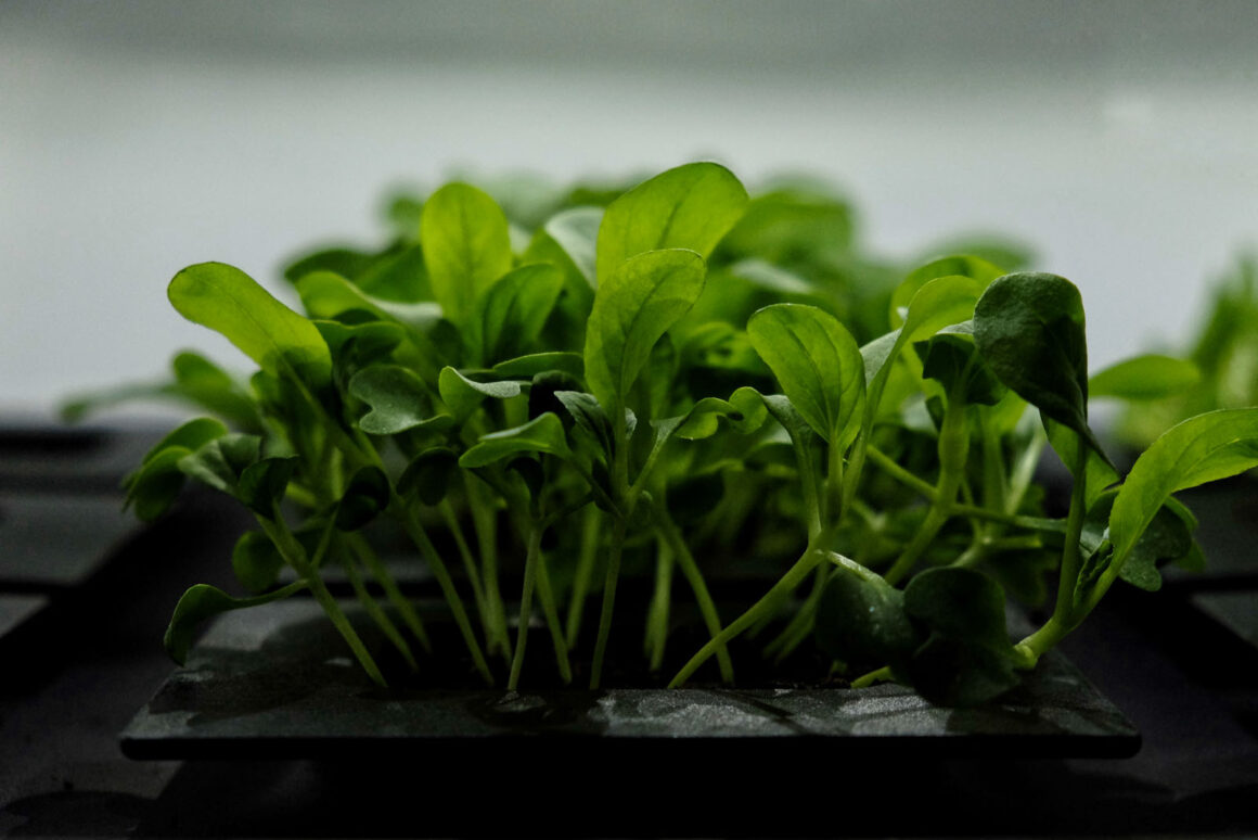 Agrilution Plantcube Vertical Farming