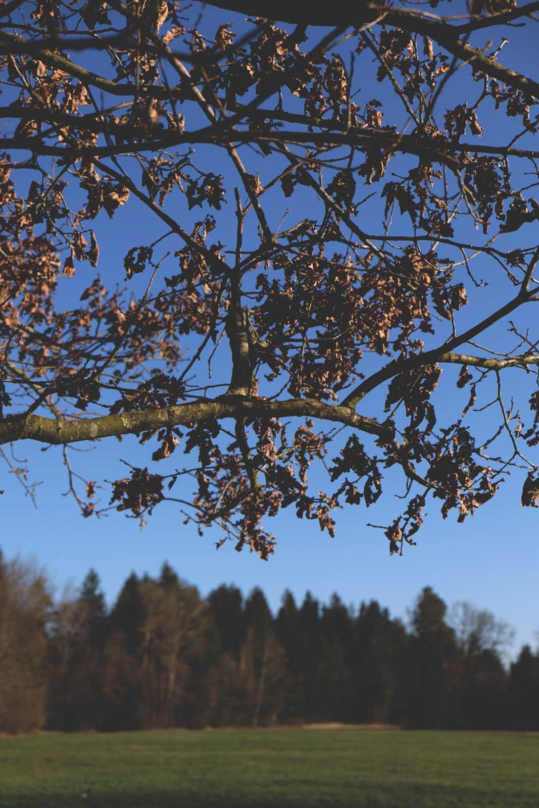 Natur Chiemgau